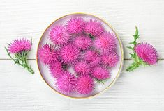 Silybum marianum milk thistle herb in a bowl. One of the most common uses of milk thistle is to treat liver problems.Alternative medicine concept on a white stock photos