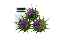 Silybum marianum. Milk thistle with medical flask Royalty Free Stock Photo