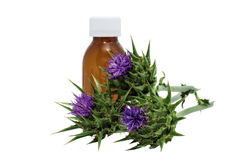 Silybum marianum. Milk thistle with medical flask Royalty Free Stock Image