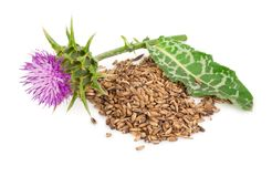 Silybum marianum Milk Thistle. Royalty Free Stock Image