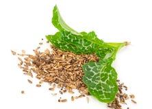 Silybum marianum Milk Thistle. Medical plants. On white background stock photography