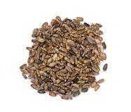 Silybum marianum seeds. On white background royalty free stock image