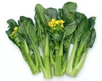 Sim chinês do vegetal-chye Imagens de Stock