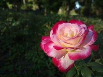 Sim, sim, sim toda a beleza do mundo em uma flor!!! Imagens de Stock Royalty Free