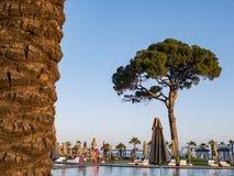 Simbassäng mot den blåa himlen och ett stort träd En tropisk semester i ett lyxigt strandhotell, en lyxig tur royaltyfria bilder