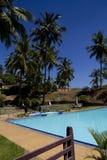 Simbassäng som omges av palmträd Arkivbilder