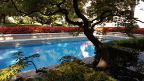 Simbassängträdgård royaltyfri bild
