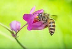 Simbiosis de la naturaleza Foto de archivo libre de regalías
