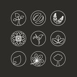 Simboli naturali bianchi - elemento astratto della natura con la foglia, albero, fiore e spighetta, bio- progettazione semplice o Immagine Stock