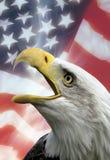 Simboli patriottici - S.U.A. - aquila Fotografia Stock Libera da Diritti