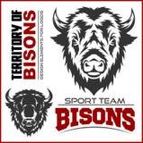 Simbolo animale capo della Buffalo Grande per l'icona Logo Design del segno dell'etichetta del distintivo Illustrazione Vettoriale