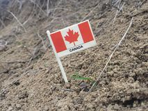 Simbolo Canada Fotografia Stock