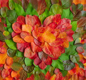 Simbolo del cuore di autunno Fotografia Stock Libera da Diritti