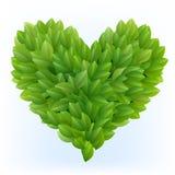 Simbolo del cuore in fogli verdi Immagine Stock
