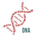 Simbolo del DNA dei cuori e del sangue di vettore Fotografia Stock