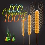 Simbolo del grano Illustrazione di vettore Immagine Stock