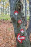 Simbolo del percorso di aumento dipinto sulla corteccia di albero Immagine Stock