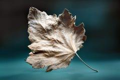 Simbolo dell'autunno Immagine Stock Libera da Diritti