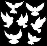 Simbolo della colomba di vettore Fotografia Stock