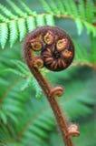 Simbolo della felce di albero di Koru della Nuova Zelanda Fotografia Stock