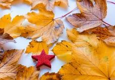 Simbolo della stella con le foglie di autunno Immagini Stock