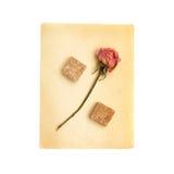 Simbolo delle percentuali dallo zucchero e dal fiore di canna Immagine Stock Libera da Diritti