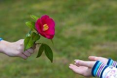 Simbolo di amicizia e di amore Fotografie Stock