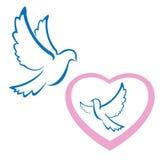Simbolo di amore della colomba fotografia stock
