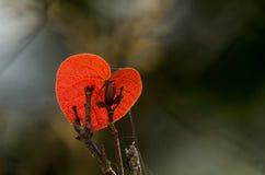 Simbolo di amore sulla foglia Immagini Stock