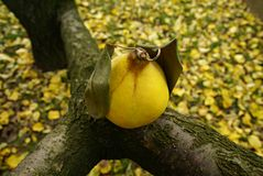 Simbolo di autunno Fotografia Stock Libera da Diritti