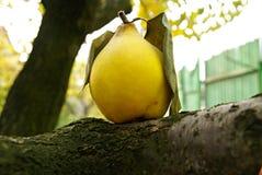 Simbolo di autunno Immagini Stock
