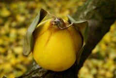 Simbolo di autunno Immagine Stock