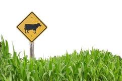 Simbolo di traffico della mucca Fotografia Stock Libera da Diritti