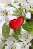 Simbolo rosso del cuore Fotografia Stock