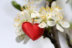 Simbolo rosso del cuore Immagini Stock Libere da Diritti
