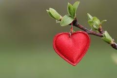Simbolo rosso del cuore Fotografie Stock
