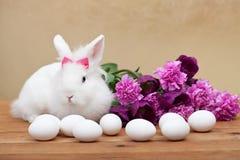 Simbols da mola - coelho branco easter de espera Imagem de Stock