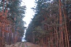 Simetría del bosque de la fantasía en sunrice nadie imagenes de archivo
