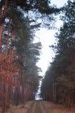 Simetría del bosque de la fantasía en sunrice nadie fotografía de archivo libre de regalías