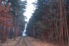 Simetría del bosque de la fantasía en sunrice nadie fotos de archivo libres de regalías
