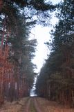 Simetría del bosque de la fantasía en sunrice nadie foto de archivo