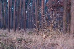 Simetría del bosque de la fantasía en sunrice nadie foto de archivo libre de regalías