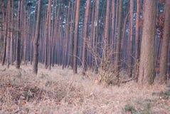 Simetría del bosque de la fantasía en sunrice nadie fotos de archivo