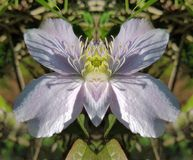 Simetría perfecta imagen de archivo libre de regalías