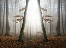 Simetria abstrata e luz mágica na floresta nevoenta Imagens de Stock