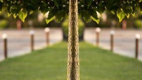 Simetria da árvore Fotos de Stock