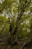 Simetrics-Bäume in einem Wald Lizenzfreie Stockfotos