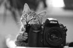 SIMFEROPOL, CRIMEA, UKRAINA, Lipiec, 22,2011 Śmieszny kot z kamerą czarny white obraz stock