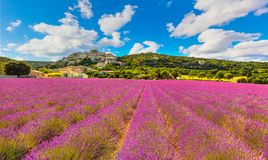 Simiane la Rotonde village and lavender panorama. Provence, Fran. Ce, Europe Royalty Free Stock Photography