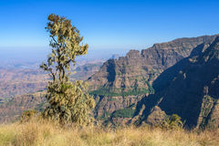 Simien山在埃塞俄比亚 免版税图库摄影